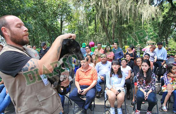 Continúa en Xalapa la venta de animales en la vía pública