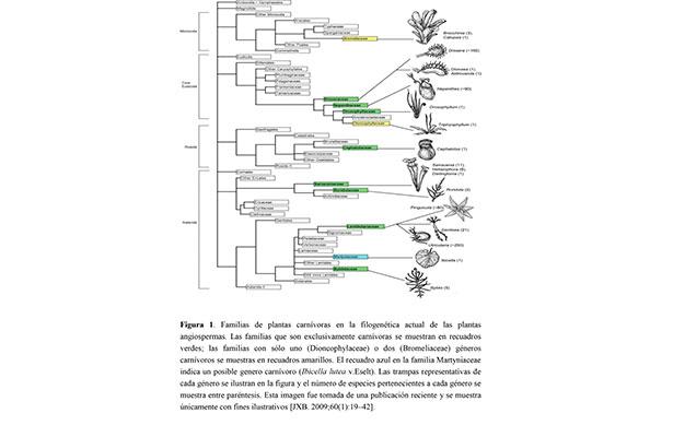 Invivo Utricularia, una de las especies favoritas del naturalista Charles Darwin