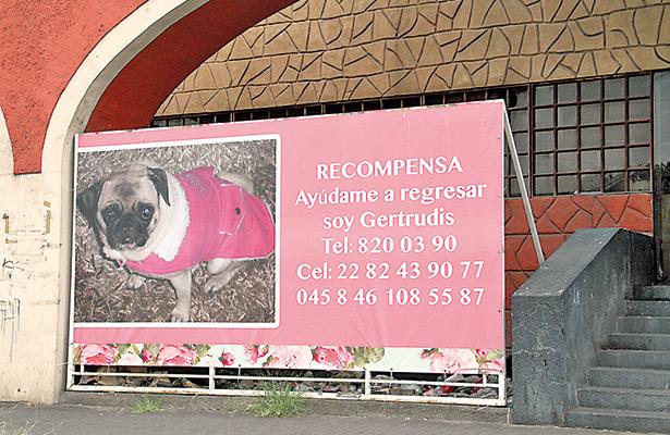Recompensas e investigadores para rescatar a mascotas
