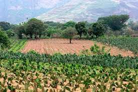 Denuncian despojo de tierras popolucas y nahuas en el sur