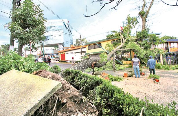 Ventarrón tiró árboles en Xalapa y hubo caos vial; 2 vehículos dañados