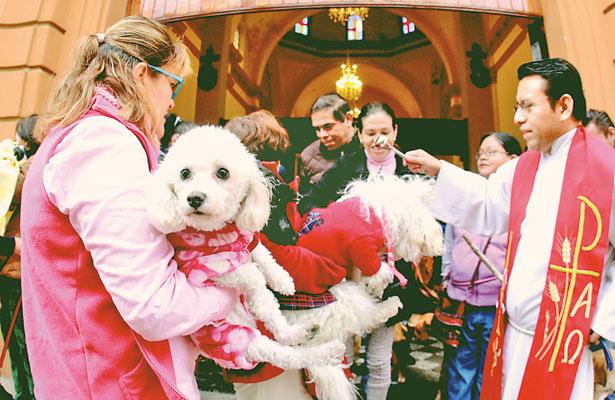 Bendicen a mascotas; llaman a promover cultura de adopción animal