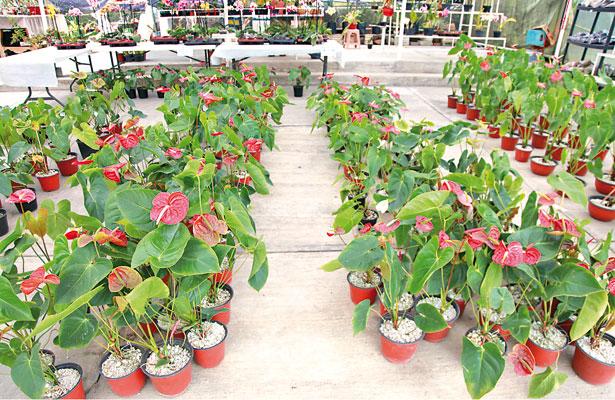 """Xalapa, ciudad de las flores… foráneas; """"casi no produce"""""""