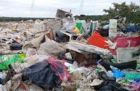 Debemos reflexionar y sumarnos a las acciones que ayuden a revertir el daño ambiental.