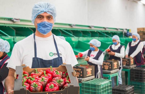 Exportaciones agroalimentarias a Japón crecieron 5.99%