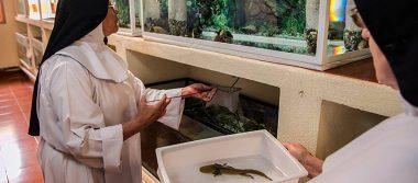 Monjas dejan el rompope y ¡preparan jarabe de salamandras!