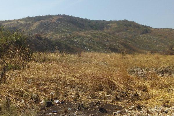 La Sepultara seriamente afectadapor deforestación: TNC