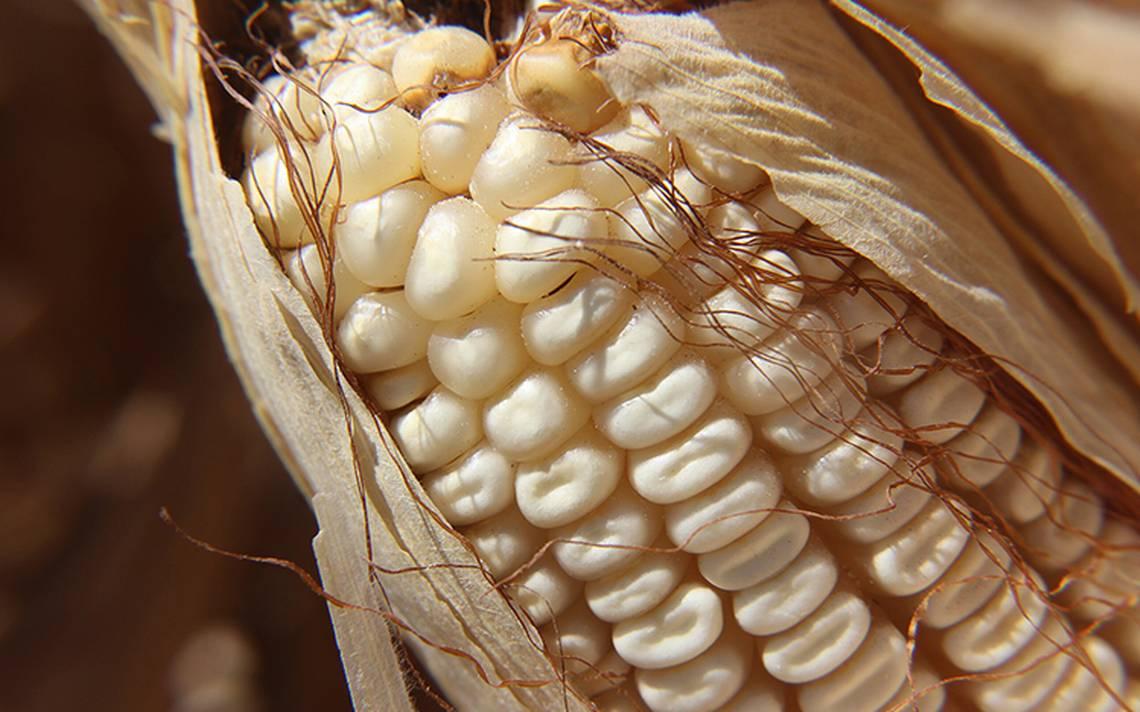 México impondría aranceles a EU en importaciones de granos