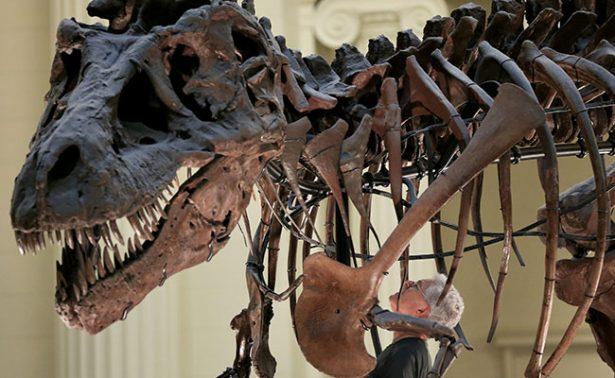 ¡Descubren que Tiranosaurio rex mordía con la fuerza de tres autos!