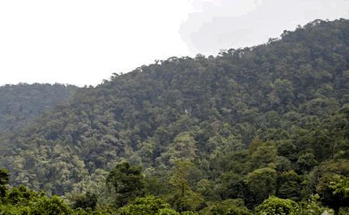 Decretan en Uxpanapa nueva Área Natural Protegida