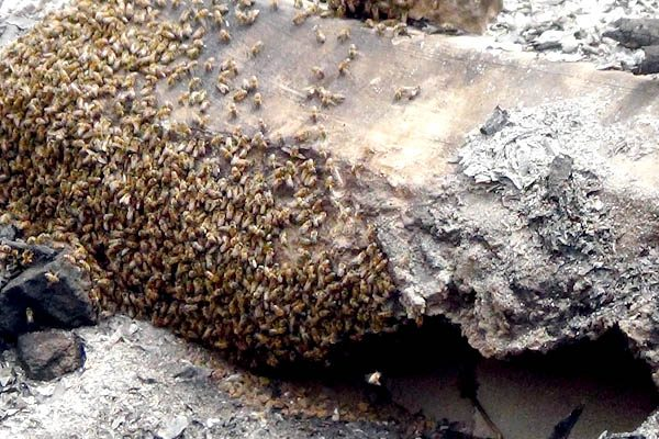 Terror en Camargo, abejas atacan a perro hasta matarlo