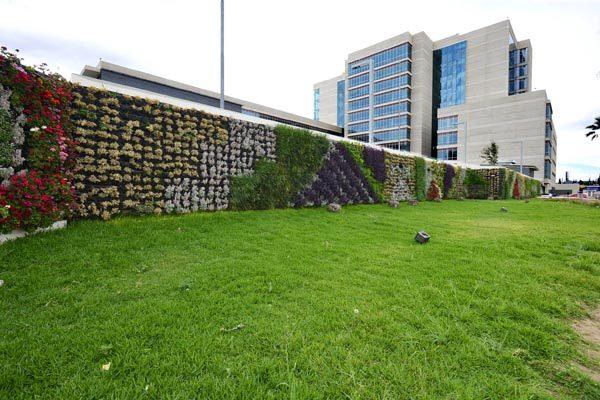 Temperaturas de Chihuahua, reto para creadores de muros verdes