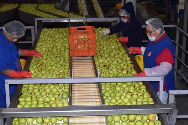 Apuesta la Norteñita por nuevos mercados para manzana orgánica