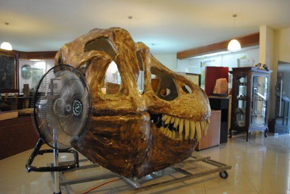Consejo de Estacionómetros niega apoyo al Museo de Paleontología