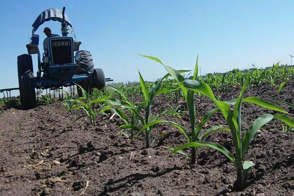 Facultad de Ciencias Agrícolas y Foretales, fortalece agricultura y ganadería