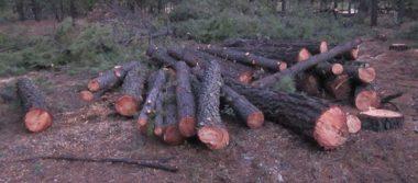 Logra FGE occidente sentencia de 5 años por delitos contra el ambiente