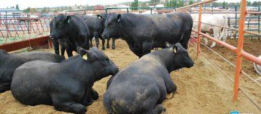Contará Expoagro 2017 con subasta de ganado de alto registro