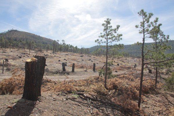 Ecocidio por tala ilegal de bosques