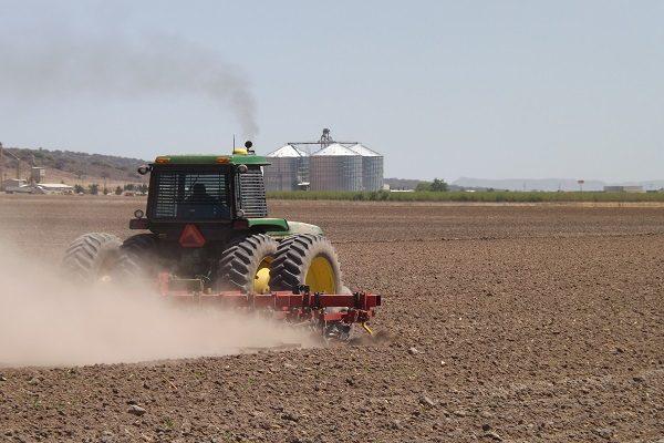 No habrá doble ciclo agrícola a causa de la sequía