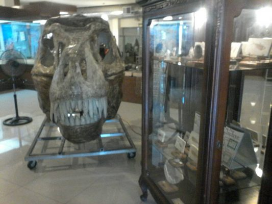 Exhibirá buevas piezas el Museo de Paleontología
