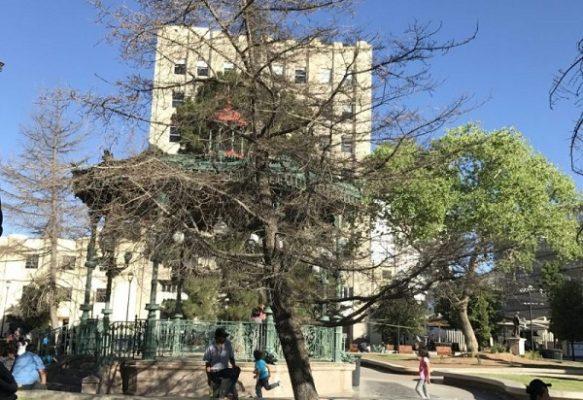 Retiran los cedros secos de la Plaza de Armas