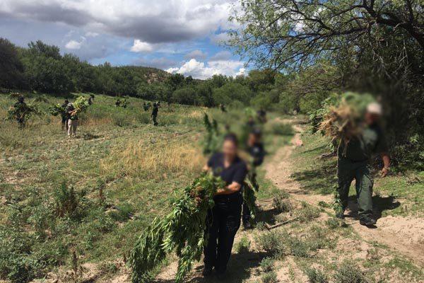 Destruyen plantío de amapola y mariguana con valor de 3 millones de pesos