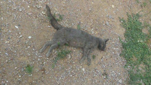 Indigna a vecinos muerte serial de perros y gatos