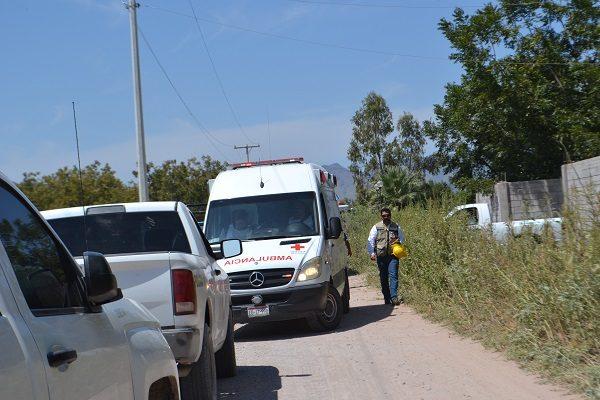 Muere hombre electrocutado al varear un nogal en Rosales