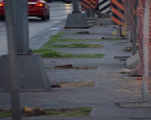 ¡Criminal ecocidio!; talaron más de 20 pinos en obras del Periférico