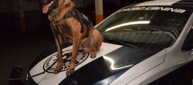 Evita suicidio perro policía; interviene en problema conyugal