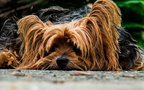 ¿Quién se queda con el perro? Hombre gana juicio a su exnovia y podrá visitar a su mascota