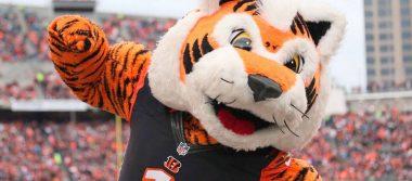 Bengalíes de Cincinnati lucharan en una de las divisiones más fuertes de la NFL