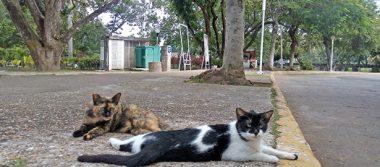 """Buscan proteger a los gatos del """"Tomás Garrido"""""""