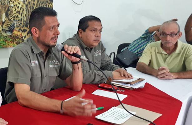 Han muerto en Tabasco 20 manatíes: Profepa