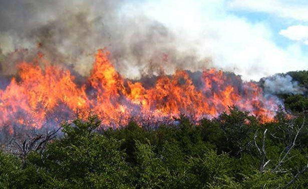 Chiapas pierde anualmente más de 40 mil hectáreas