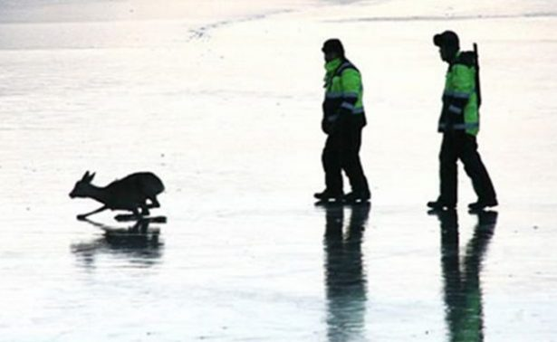 Rescatan a venado atrapado en un estanque congelado