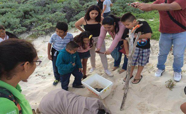 Investigan sustracción de tortugas en playas de Cozumel