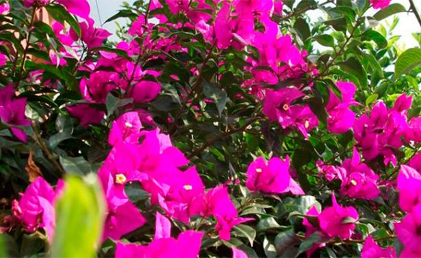 Jardín mexicano engala el Chelsea Flower Show en Londres
