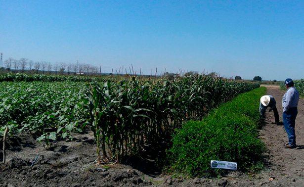Cambio climático modifica ciclos de cultivo