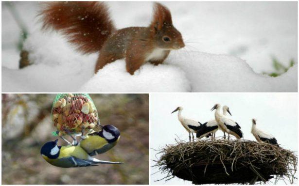 Emigrar, dormir o enterrarse: cómo pasan algunos animales el invierno