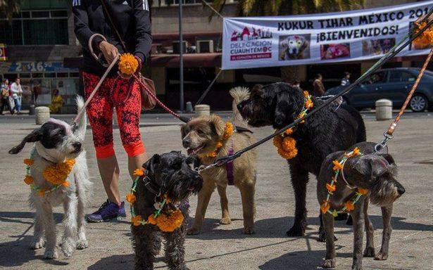 Perros llegan al Monumento a la Revolución para ser honrados en festival #KukurTihar