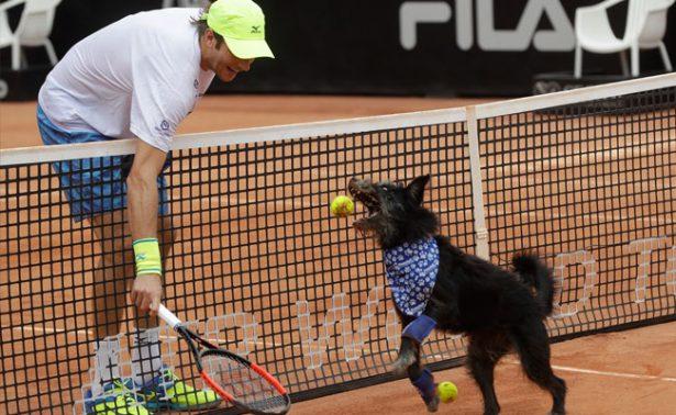 Perros abandonados; los nuevos recogepelotas del Abierto de Tenis Brasil