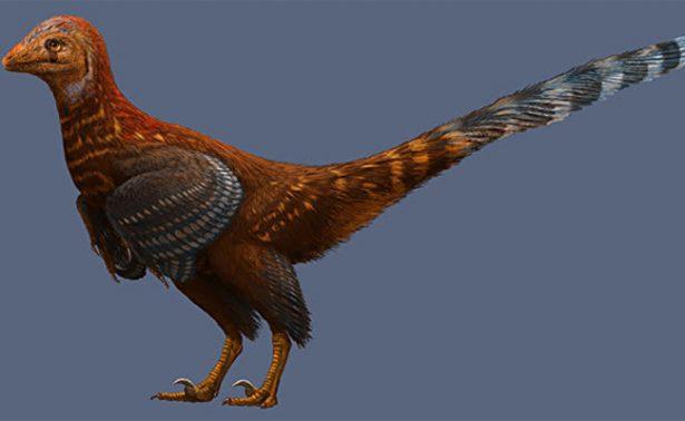 Descubren al primer dinosaurio con plumas similares a las de los pájaros
