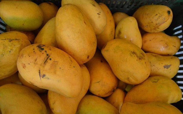 Buscan en Chiapas ampliar cultivo de mango