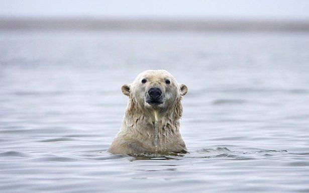 Descubren que el hielo del Ártico ¡se está derritiendo más rápido!