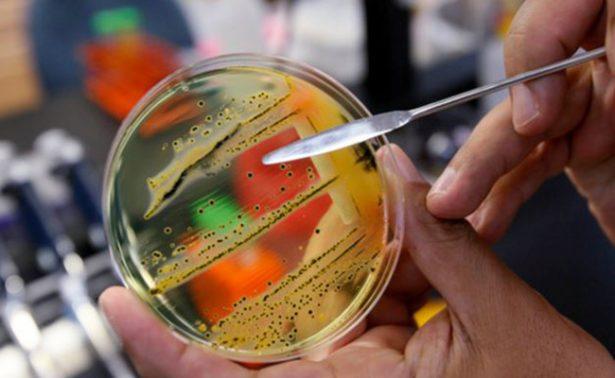 OMS revela 12 familias de bacterias que ponen en riesgo a la humanidad
