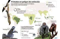 Ya no habrá primates para darles su banana