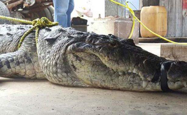 ¡Colonias de Ciudad Madero en riesgo por cocodrilos!