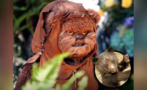 Las criaturas que inspiraron al universo de Star Wars