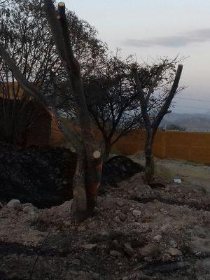 Denuncia Comité de Salvabosque obras en el Nixticuil